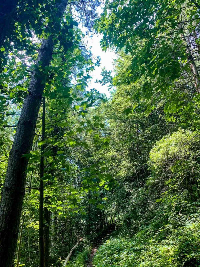 Wir lieben es durch den Wald zu fahren