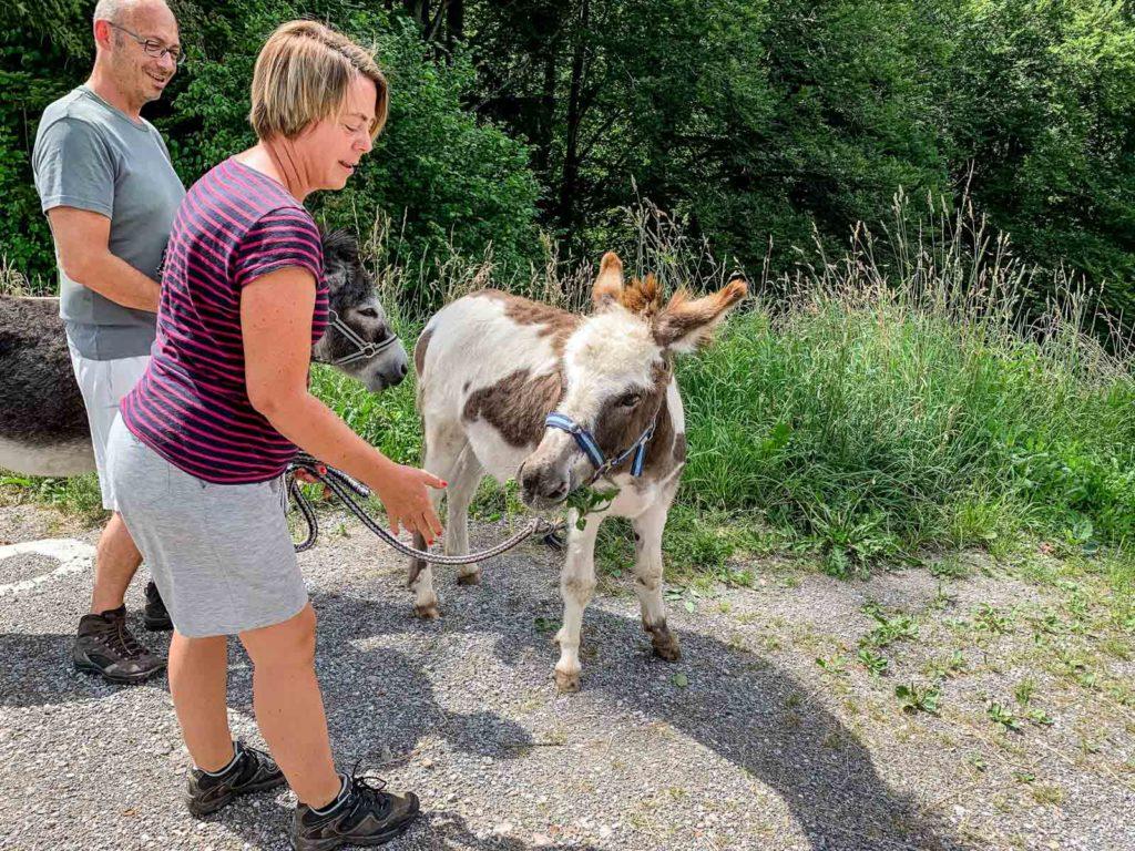 Auch Esel haben mit uns den Trail geteilt