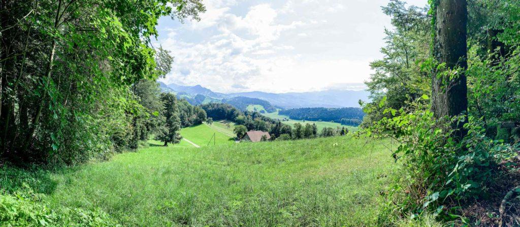Aussicht Güntisberg